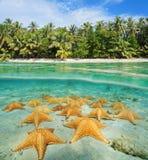Tropisk kust som delas med undervattens- havsstjärnor Fotografering för Bildbyråer