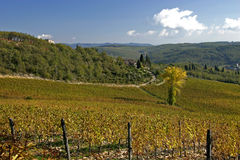 Tuscan Vineyard Stock Image