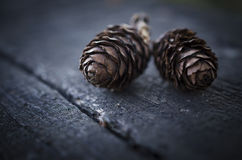 Two fir cones Stock Image