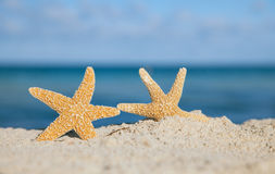 Two sea star starfish on beach Stock Images