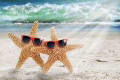 Two Starfish Beach Sunglasses Royalty Free Stock Image
