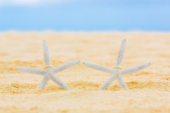 Two wedding rings with two starfish on a sandy tropical beach. Wedding and honeymoon in the tropics Royalty Free Stock Photos