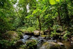 Un piccolo fiume nella giungla densa verde Immagine Stock Libera da Diritti