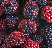 Вunch of wild berries Stock Photo