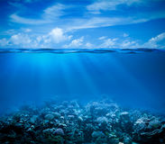 Underwater with horizon and water surface Stock Photo