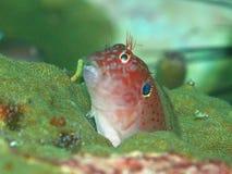 Unusual marine sea creature Stock Photography