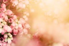 A urze floresce em uma queda, prado do outono no sol de brilho do settng Foto de Stock Royalty Free