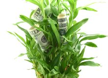 US dollars in green plant leaves, concept of getting dividends or returns from your money, invest it for better future Royalty Free Stock Photos