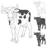 Vaca blanco y negro del vector Vista lateral objetos Imagen de archivo libre de regalías