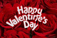 Valentines Day Roses Royalty Free Stock Photo
