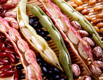 Variety of dried beans Royalty Free Stock Photography