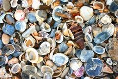 Variety of sea shells Royalty Free Stock Photography