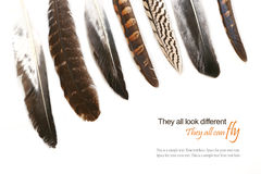 Various feathers isolated on white background, sample text Stock Photography