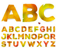 Vector alphabet letters made from autumn leaves Royalty Free Stock Images