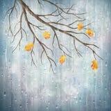 Vector autumn rain weather artistic natural design Royalty Free Stock Photo