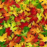 Vector background design with colorful autumn leaves, seamless pattern Royalty Free Stock Image