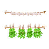Vector clipart. Garlic and thyme hanging on rope (for web use) Royalty Free Stock Photo