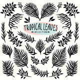 Vector ink drawn leaves collection Royalty Free Stock Images