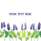 Vector watercolor natural sage plant background Royalty Free Stock Photo