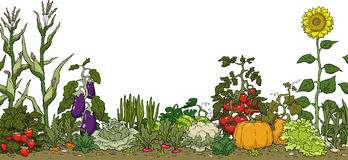 Vegetable garden bed Royalty Free Stock Photo