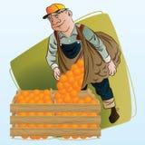 Vektorauf lagerabbildung Ernten Ein Mann sammelt Orangen Stockfoto