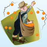 Vektorauf lagerabbildung Ernten Ein Mann sammelt Orangen Lizenzfreie Stockfotografie