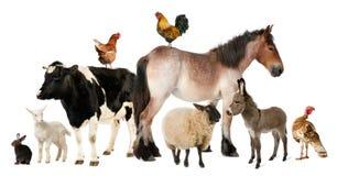 Verscheidenheid van landbouwbedrijfdieren Stock Fotografie