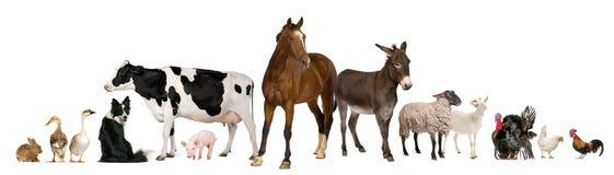 Verscheidenheid van landbouwbedrijfdieren Royalty-vrije Stock Afbeeldingen