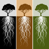 Vertical Tree Root Banner Set Royalty Free Stock Photos