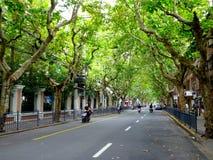 Via di Shanghai Immagini Stock Libere da Diritti