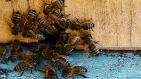 Video of bee hive stock video footage