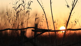 Video of sunset stock footage