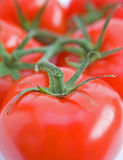 Vine tomatoes. Stock Images