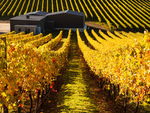 Vineyard in Adelaide Hills Stock Photography