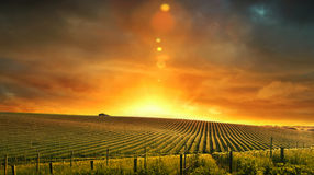 Vineyard Colours Stock Photography