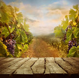 Vineyard design Stock Photos