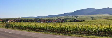 Vineyard and small village in Alsace - France Royalty Free Stock Images