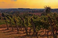 Vineyard in Tuscany Stock Photography