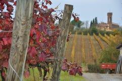 Vineyards for sangiovese  San Miniato Tuscany Italy Royalty Free Stock Photography