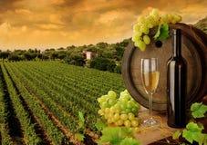 Vinho e vinhedo no por do sol Imagem de Stock