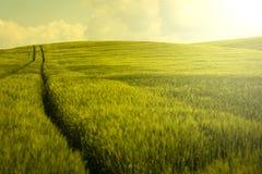 Vintage barley field Stock Images