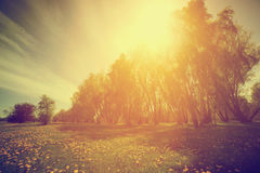 Vintage nature. Spring sunny park, trees and dandelions Royalty Free Stock Images