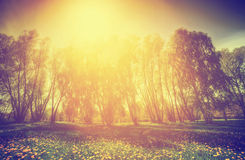 Vintage nature. Spring sunny park, trees and dandelions Royalty Free Stock Photos