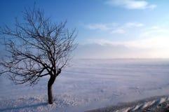 vinter för krabbastormtree Fotografering för Bildbyråer