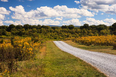 Virginia Country Road Through Goldenrod Wildflowers Royalty Free Stock Photos