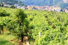 Viticulture in the Valle Cembra, Italian Dolomites Stock Photos