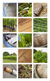 Viticulture and vineyards Stock Images