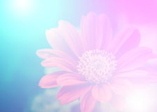 Vivid color beautiful wild flowers in soft style. Royalty Free Stock Image