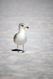 Vogel auf dem Strand Stockfoto