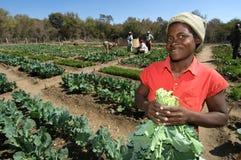 Vrouwelijke Landbouwer in Zimbabwe Stock Afbeelding